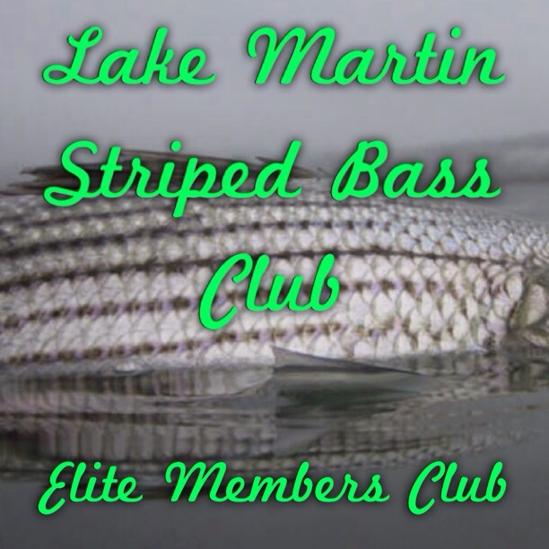 Striped Bass Club Lake Martin, AL